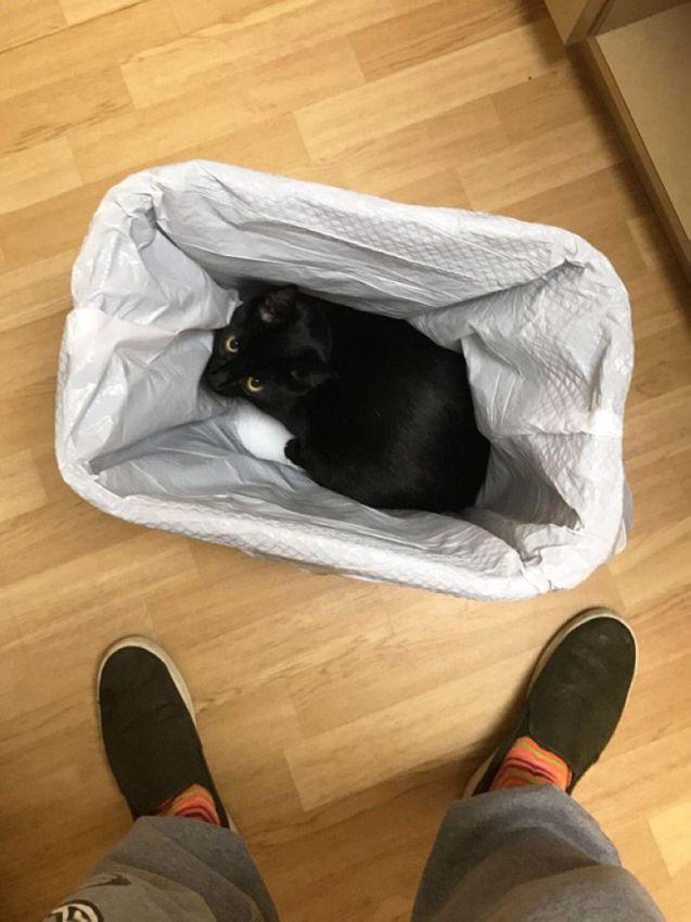 Куда кошки прячутся от ветеринаров